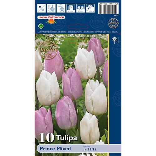 Tulipán Prince, mix изображение 1 артикул 68051