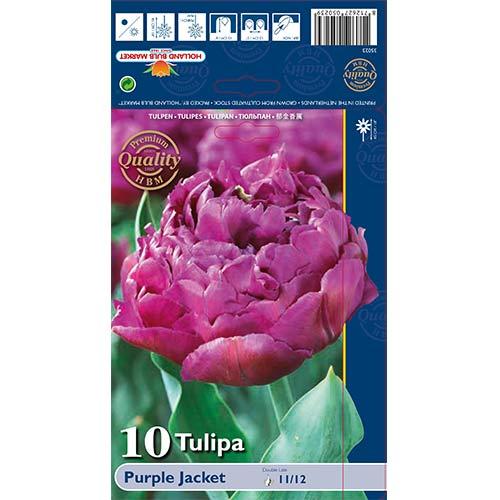 Tulipán Purple Jacket изображение 1 артикул 68040