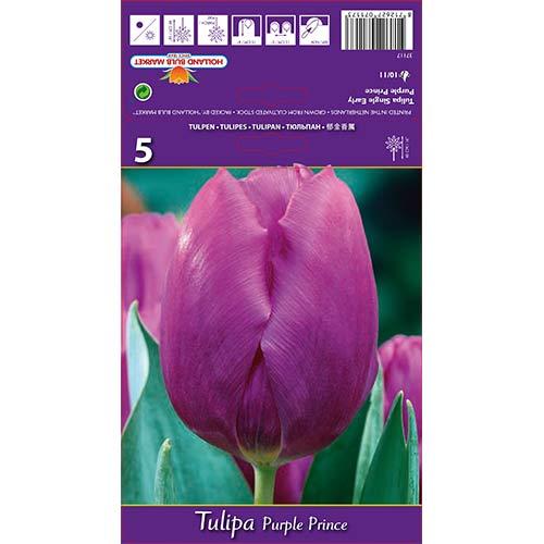 Tulipán Purple Prince изображение 1 артикул 67791