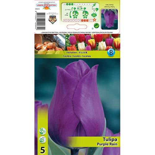 Tulipán Purple Rain изображение 1 артикул 67792
