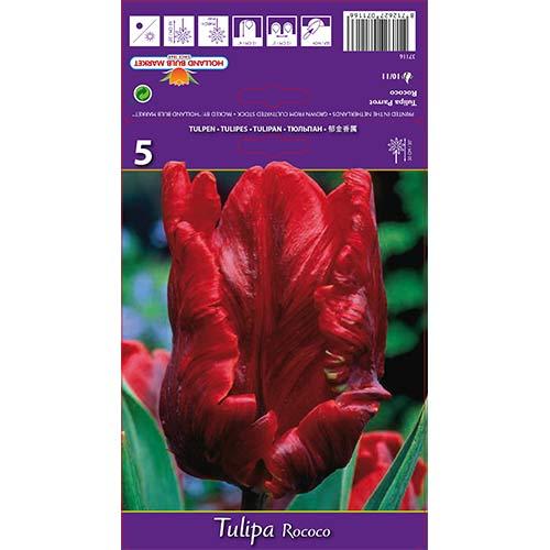 Tulipán Rococo изображение 1 артикул 67817