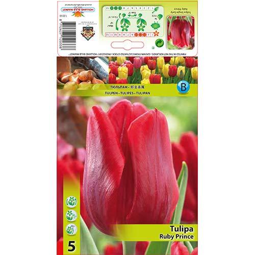 Tulipán Ruby Prince изображение 1 артикул 68086