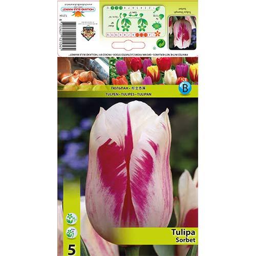 Tulipán Sorbet изображение 1 артикул 67835