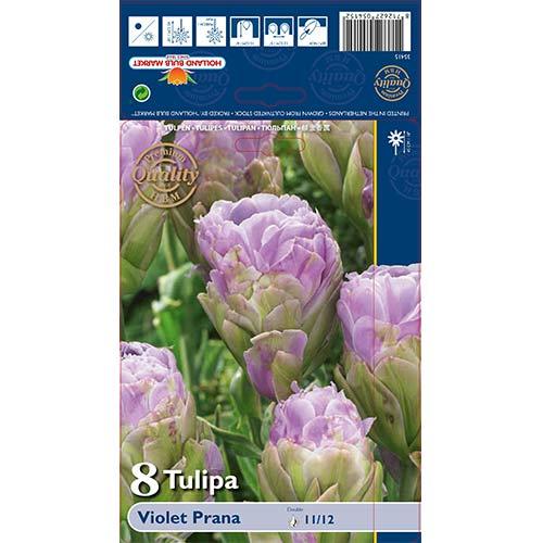 Tulipán Violet Prana изображение 1 артикул 68119