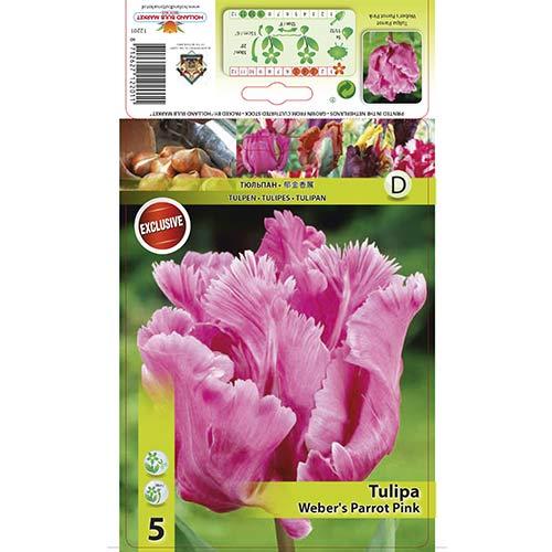 Tulipán Webers Parrot Pink изображение 1 артикул 67711