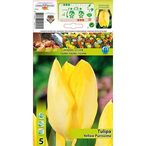 Tulipán Yellow Purissima изображение 1 артикул 67734