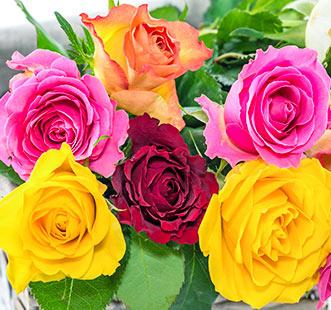 Ruža 2021